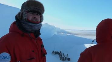Troupe BBC si ribella, pinguini salvi