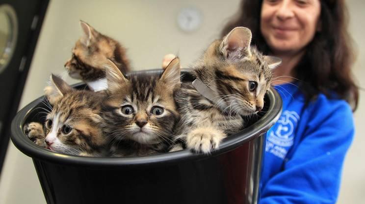 In diversi Stati europei il 17 febbraio è la giornata dedicata ai gatti