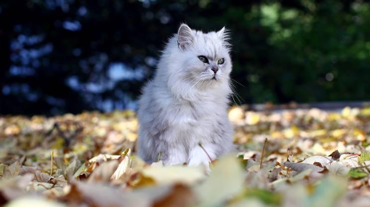 Indipendente e discreto, il gatto ha i suoi sistemi per dimostrare affetto agli umani