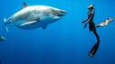 Selfie con lo squalo bianco