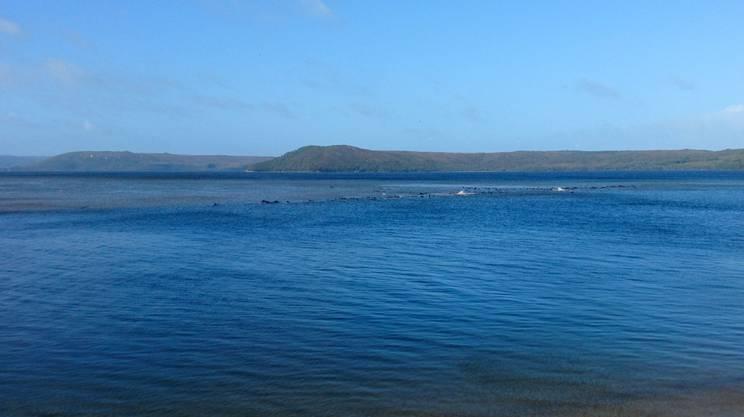 Un'immagine della zona dove sono spiaggiati i cetacei