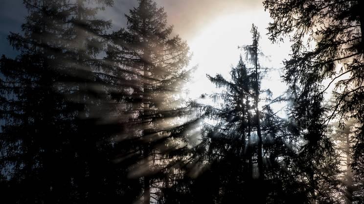 Uomini e alberi. Il bosco nella storia