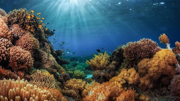 Coltivare il mare per salvarlo