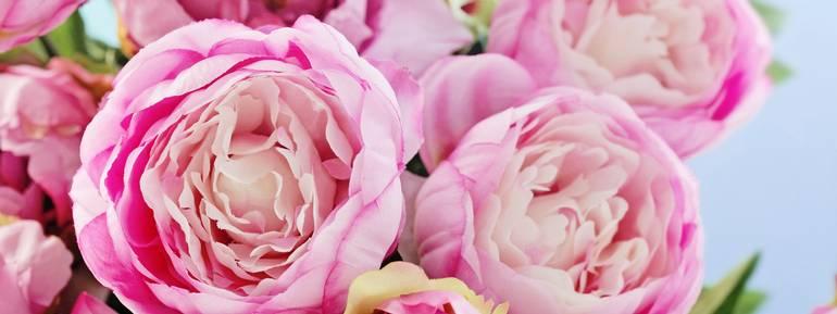 Peonia Rosa, Bouquet, mazzo di fiori