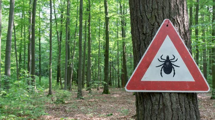 cartello, attenzione, zecche, bosco