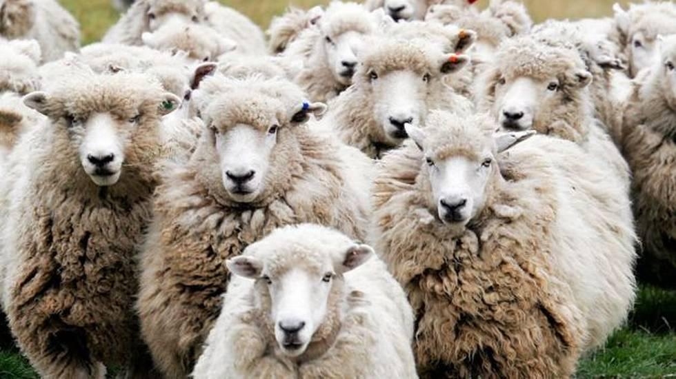 Dalla pecora al Wool-ti