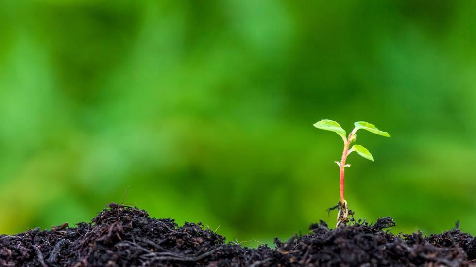 Seme, Piantare, Piantina di semenzaio, Crescita, Vegetazione