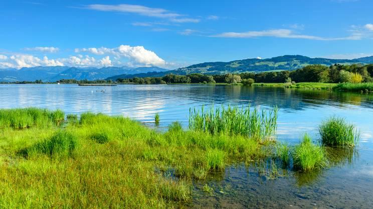 habitat, natura, Riva del lago, Lago di Costanza
