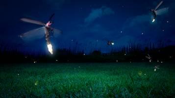 lucciole campo di erba di notte