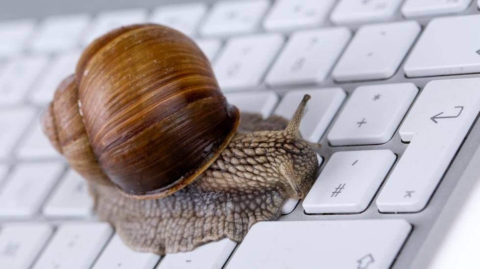 Chiocciola, tastiera, pc, lentezza, lumaca, Internet, Tecnologia, Argento, Computer, Computer portatile