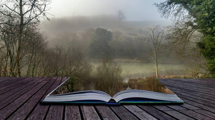 Moody incredibile foresta paesaggio di primavera e autunno nebbia autunnale, Spettrale, Albero, Concetti e temi, Flora
