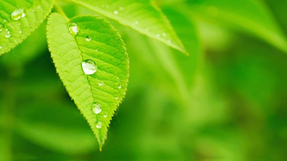 Natura, Verde, Ambiente, Foglia, Acqua, Trattamento di benessere