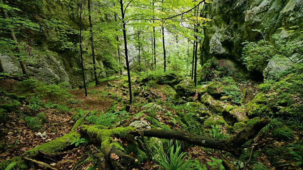 Naturalpark Thal