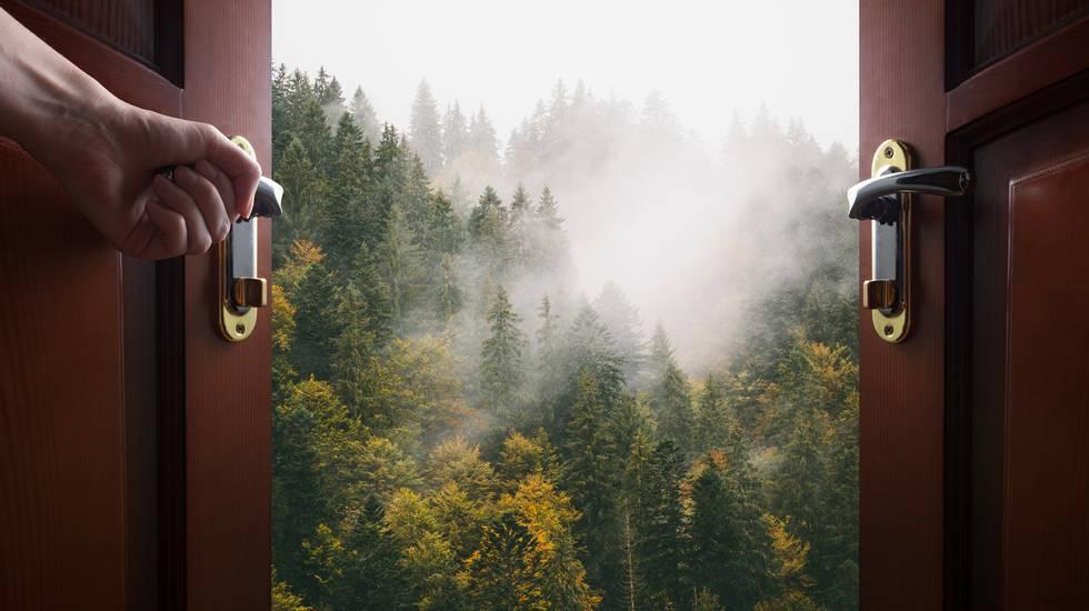 Porta, aperta casa, fuori natura, bosco
