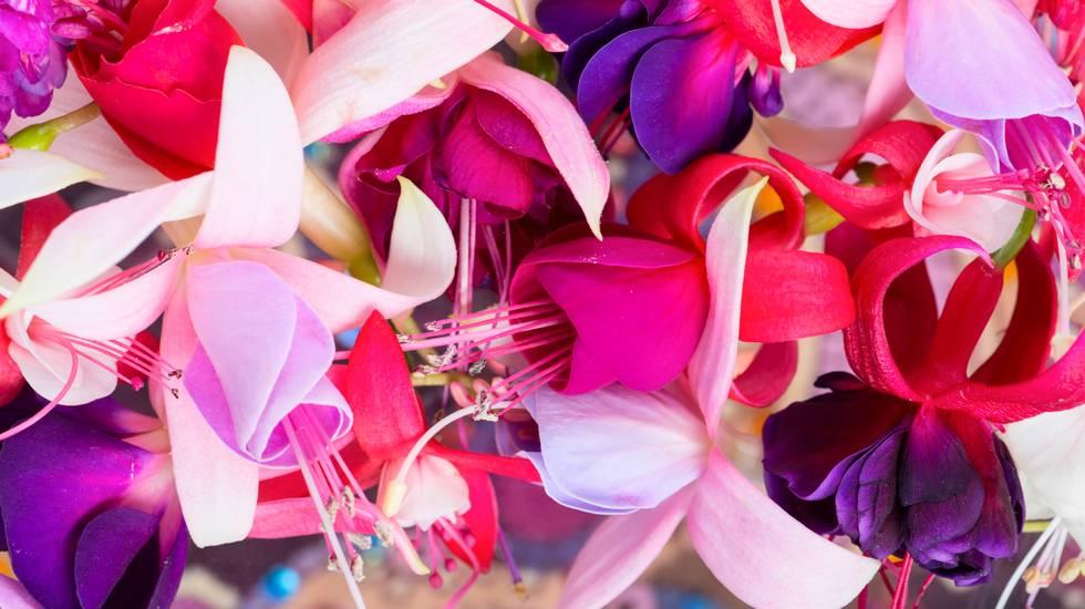 Varietà, Fiore, Mazzo, Mazzo di fiori, Vitalità