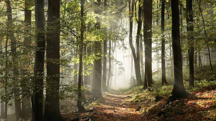 sentiero bosco, tumore, rinascere
