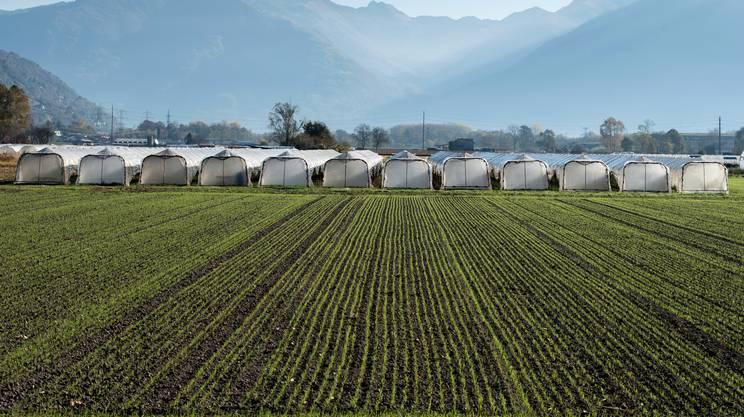 terra, agricoltori, Piano di Magadino