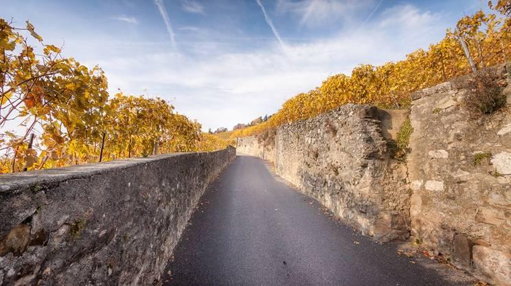 La Via di Bacco, Lodrino