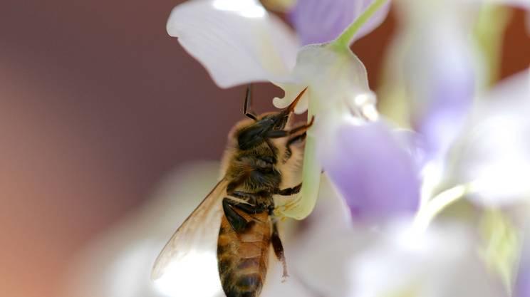 TIBEES, Scientific Bee Health Symposium, 100 anni della Società ticinese di apicoltura