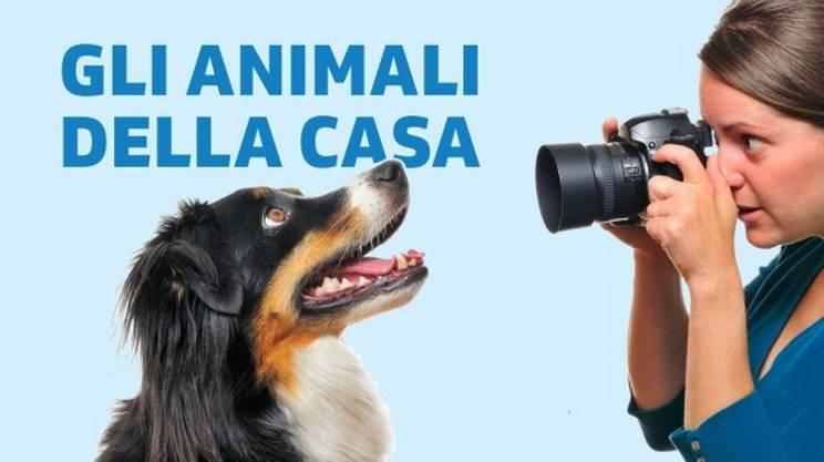 Fotografare gli animali della casa