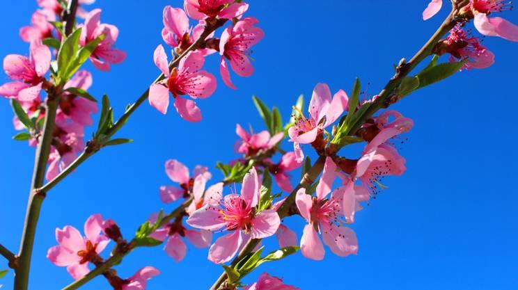 Rete Uno e la Festa di Primavera