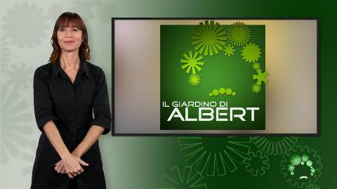 Il giardino di Albert LIS