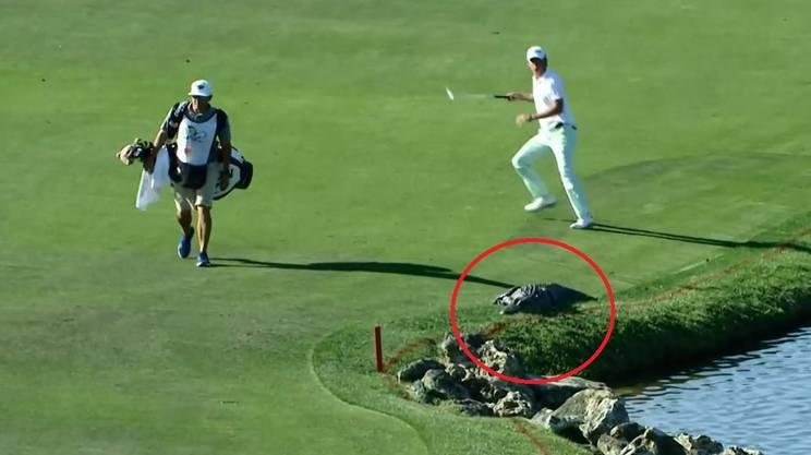 Golfista spaventato da un alligatore