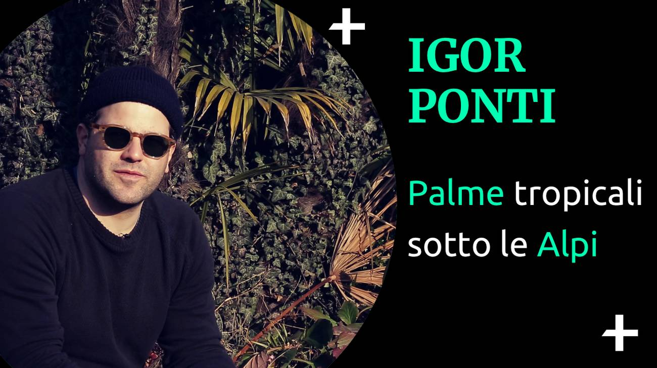Cult+ Igor Ponti (l)