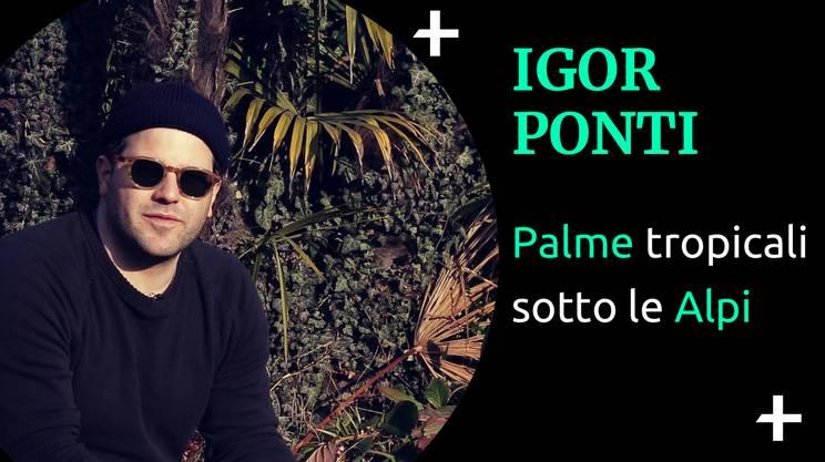 Cult+ Igor Ponti (s)