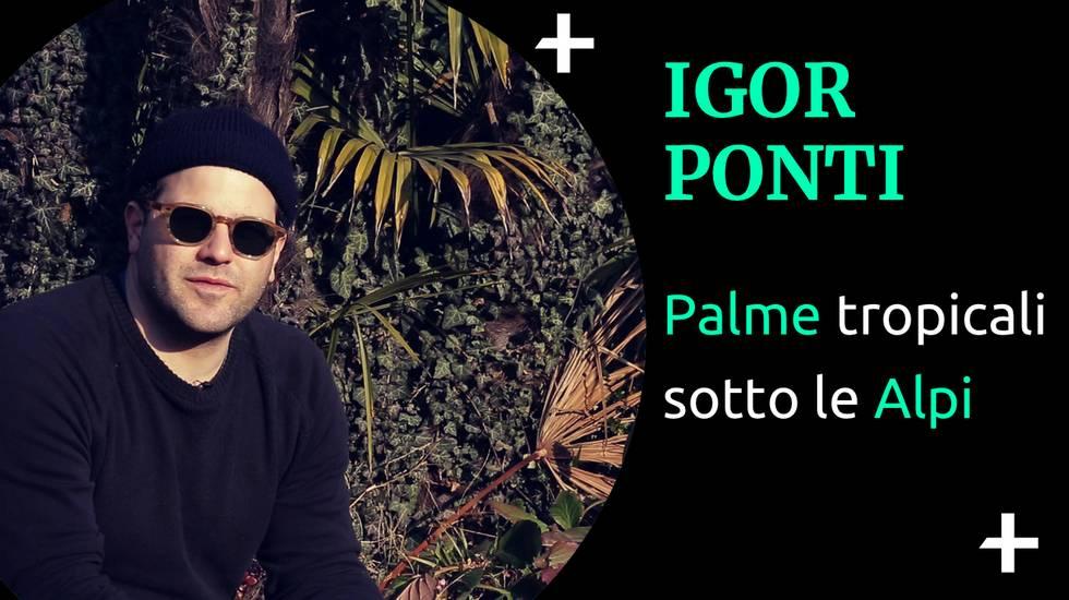 Cult+ Igor Ponti (m)