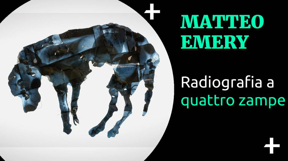 Cult+ Matteo Emery - Radiografia a quattro zampe (m)