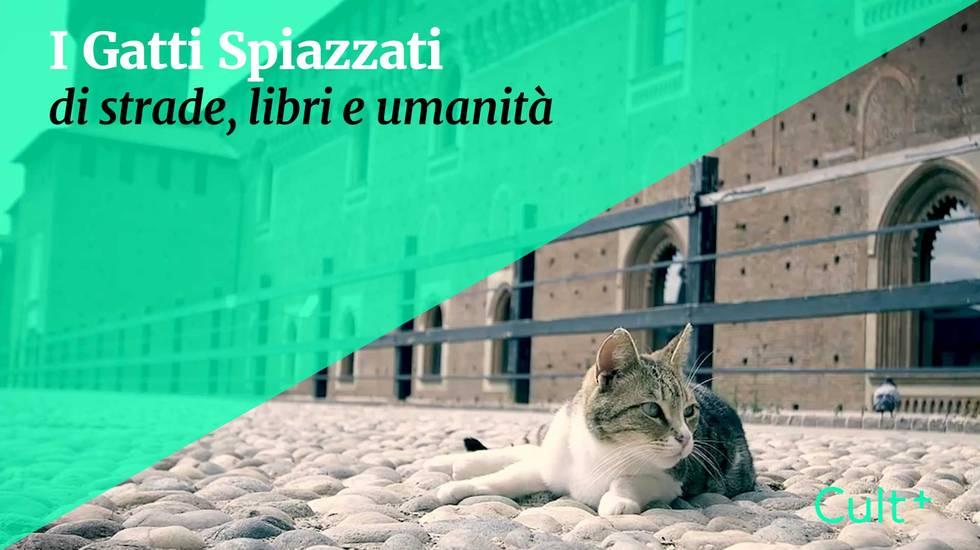 I gatti spiazzati  (m)
