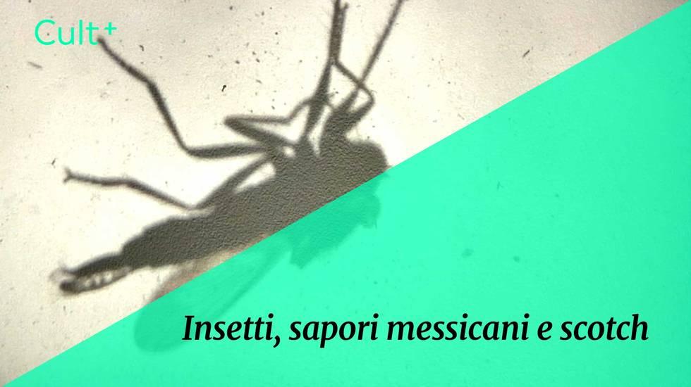 Insetti (m)