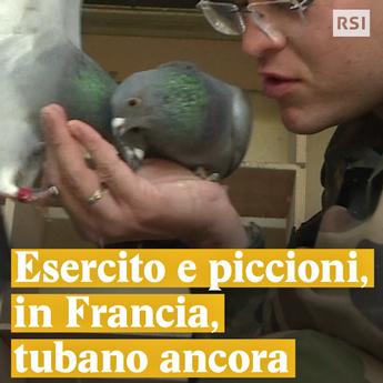 Un esercito di piccioni