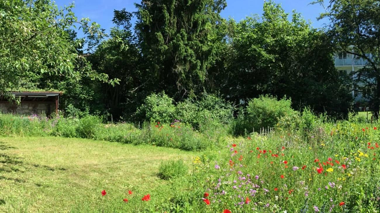 Piccoli Alberi Da Giardino nove consigli per un giardino più naturale - rsi